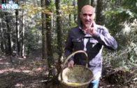 Le folli idee di Lucio Gardin sui funghi